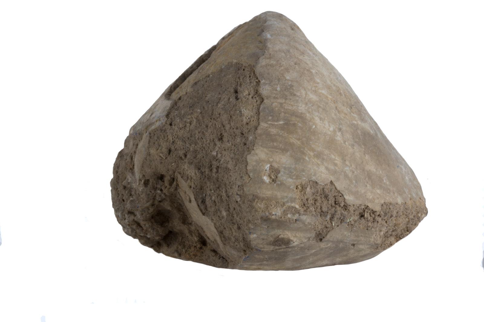 Strophomenata